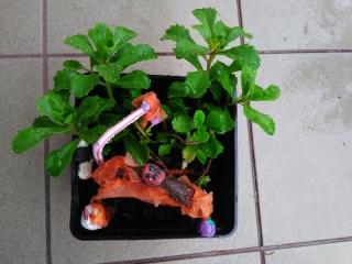 sadzenie_kwiatkow_3_lm